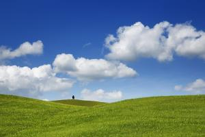 Barley Field and Cumulonimbus Clouds by Frank Krahmer