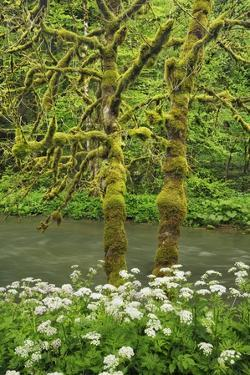 Brook in Moss Covered Beech Forest by Frank Krahmer