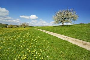 Cherry and Field Path by Frank Krahmer