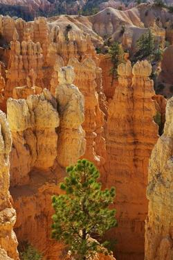 Eroded Landscape in Bryce Canyon at Fairyland Point, Usa, Utah, Bryce Canyon National Park by Frank Krahmer