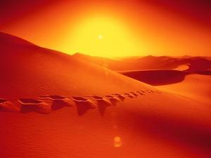 Footprints in desert by Frank Krahmer