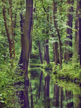 Forest and stream by Frank Krahmer