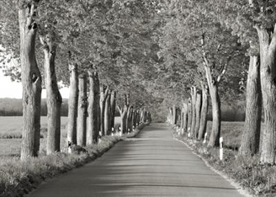 Lime tree alley, Mecklenburg Lake District, Germany by Frank Krahmer