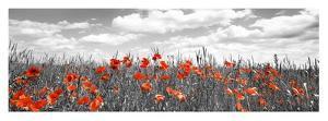 Poppies in corn field, Bavaria, Germany by Frank Krahmer