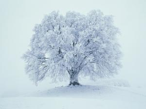Snow covered tree by Frank Krahmer