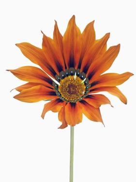Treasure flower by Frank Krahmer