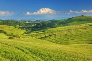 Tuscany Landscape with Corn Fields by Frank Krahmer