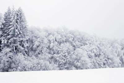 Winter Landscape with Snow Covered Forest by Frank Krahmer
