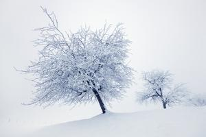 Winter Landscape with Snow Covered Fruit Trees by Frank Krahmer
