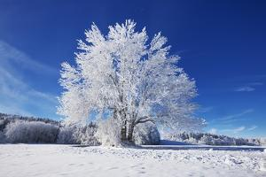 Winter Landscape with Snow Covered Tree by Frank Krahmer