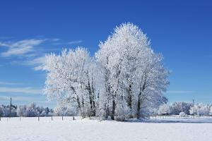 Winter Landscape with Snow Covered Trees by Frank Krahmer
