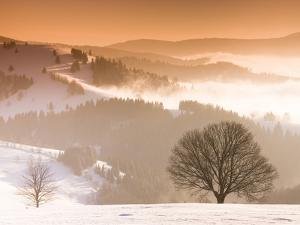 Beech trees in snow covered landscape by Frank Lukasseck