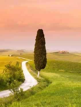 Cypress Tree by Dirt Road at Sunset by Frank Lukasseck