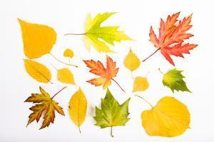 Fall Leaves by Frank Lukasseck