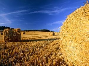 Field with bales of hay by Frank Lukasseck