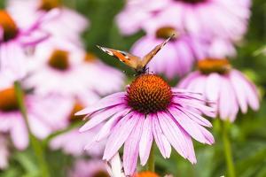 Flowering Garden by Frank Lukasseck