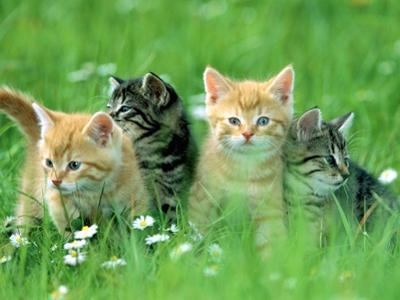 Four Kittens by Frank Lukasseck