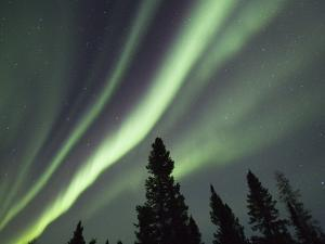 Northern Lights over Boreal Forest by Frank Lukasseck