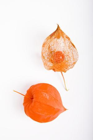 Orange Chinese Lantern Plant by Frank Lukasseck