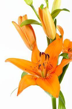 Orange Lilies by Frank Lukasseck