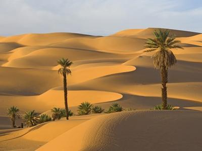 Palm Trees in Desert by Frank Lukasseck