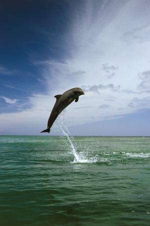 Sea, Ordinary Dolphin, Delphinus Delphis, Jump, Series by Frank Lukasseck