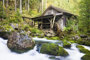 Small Wood Watermill and Brook by Frank Lukasseck