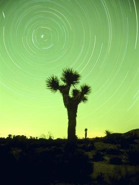 USA, California, Joshua Tree National Park and star trails at night by Frank Lukasseck
