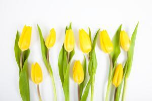 Yellow Tulips by Frank Lukasseck