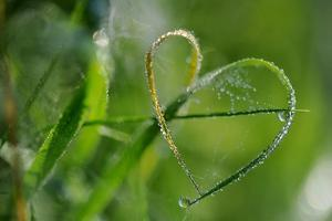 Grass Formed Itself in a Heart Shape with Morning Dew by Frank May