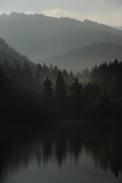 The Morning Light Is Coming Up in the Harz Mountains of Germany by Frank May
