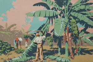 Cutting Bananas in Jamaica by Frank Newbould
