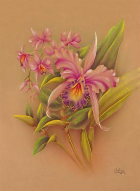 Pink Cattleya Orchid Flower - Hale Pua Studio Hawaii by Frank Oda