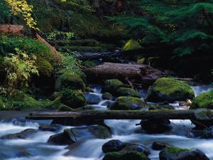 Royal Creek, OR by Frank Staub