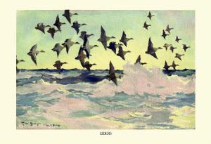 Eiders by Frank Weston Benson