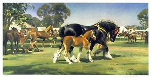 Horse Show by Frank Wootton