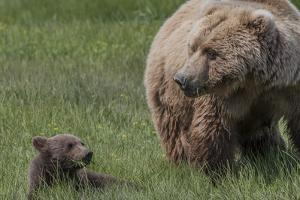 USA, Alaska, Katmai National Park, Hallo Bay. Coastal Brown Bear with cub by Frank Zurey