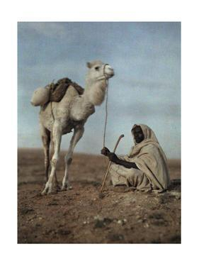 A Man Takes a Break with His White Camel by Franklin Price Knott