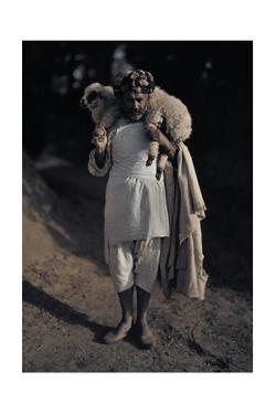 A Shepherd Carries One of His Flock to the Market by Franklin Price Knott