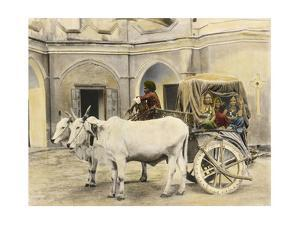 Teenage Girls Smile and Wave Out of a Canopied Wagon Drawn by Oxen by Franklin Price Knott