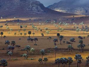 Palm Savanna, Horombe Plateau, Southern Madagascar by Frans Lanting