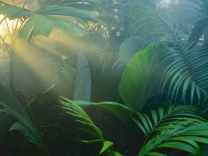 Rainforest Vegetation in Morning Light by Frans Lanting