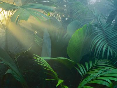 Rainforest Vegetation in Morning Light