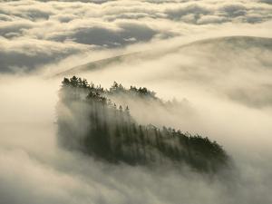 Redwoods in Fog, Monterey Bay, California by Frans Lanting