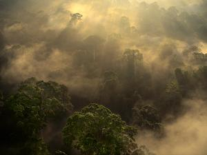 Sunrise over Lowland Rainforest, Danum Valley, Sabah, Borneo by Frans Lanting