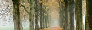 The Netherlands, 'S-Graveland, Beech Lane, Country Road, Autumn Colors by Frans Lemmens
