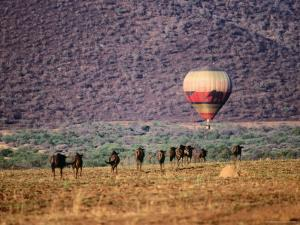 Wildebeests and Hot-Air Balloon by Frans Lemmens