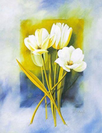 White Narcissus by Franz Heigl