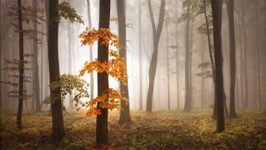 In November Light by Franz Schumacher
