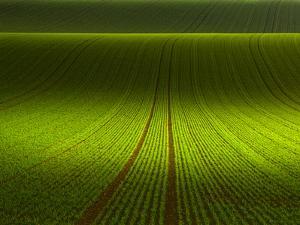 November Green by Franz Schumacher